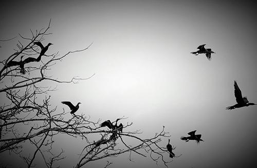 oiseaux_colombie-(3)
